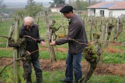 Vignes Préphylloxériques