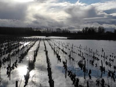 Vignes inondées