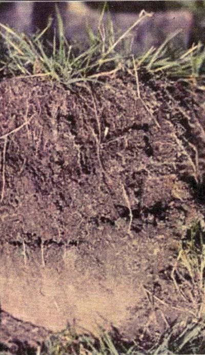 L'humus ferment de la vie des sols