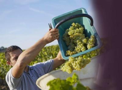 """Concours Photo """"j'aime Mes Vignes"""""""