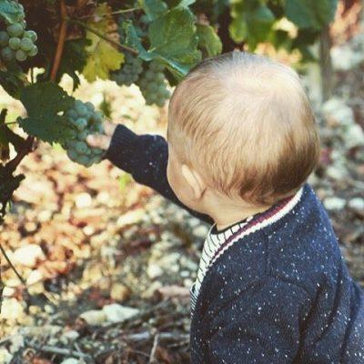 Happybirthday à notre petit dernier Camille ! #vendanges de notre 100% Sauvignon Blanc Compte instagram @hautbourcier